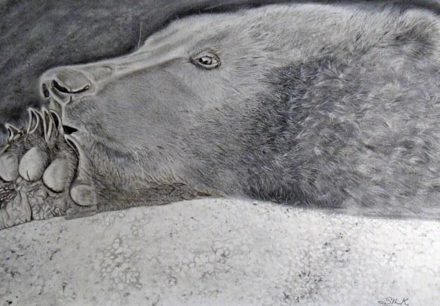 Munsey- charcoal drawing