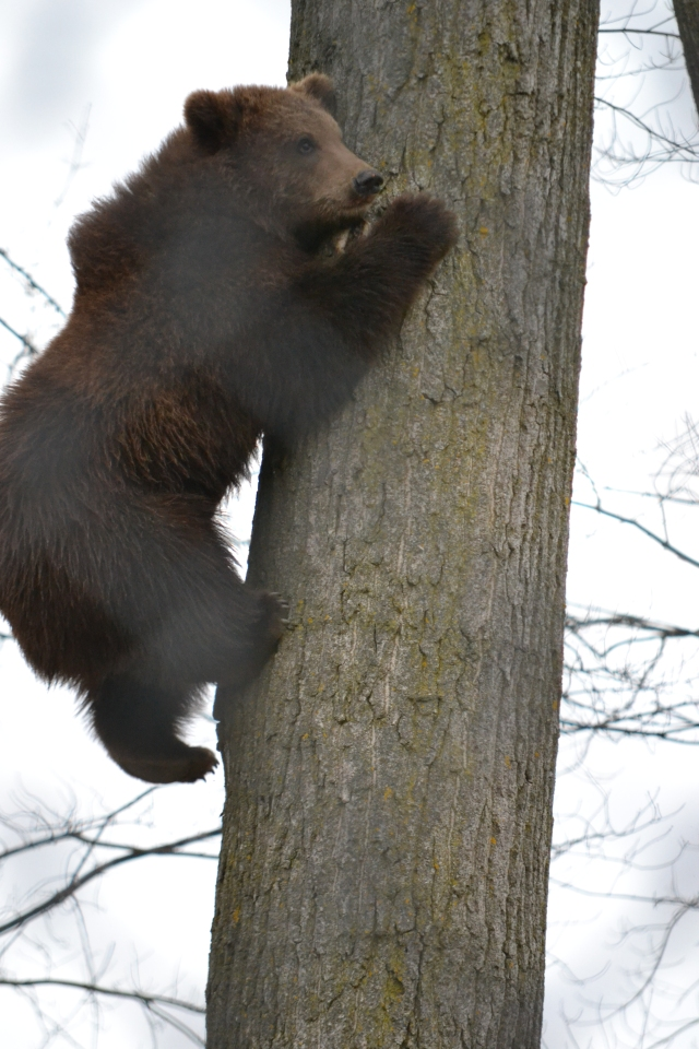 aDSC_1717 tree climbing wendlandt